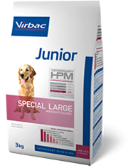 Junior - Special Large