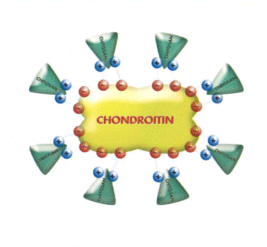 Fortiflex Chrondroitin-1.png